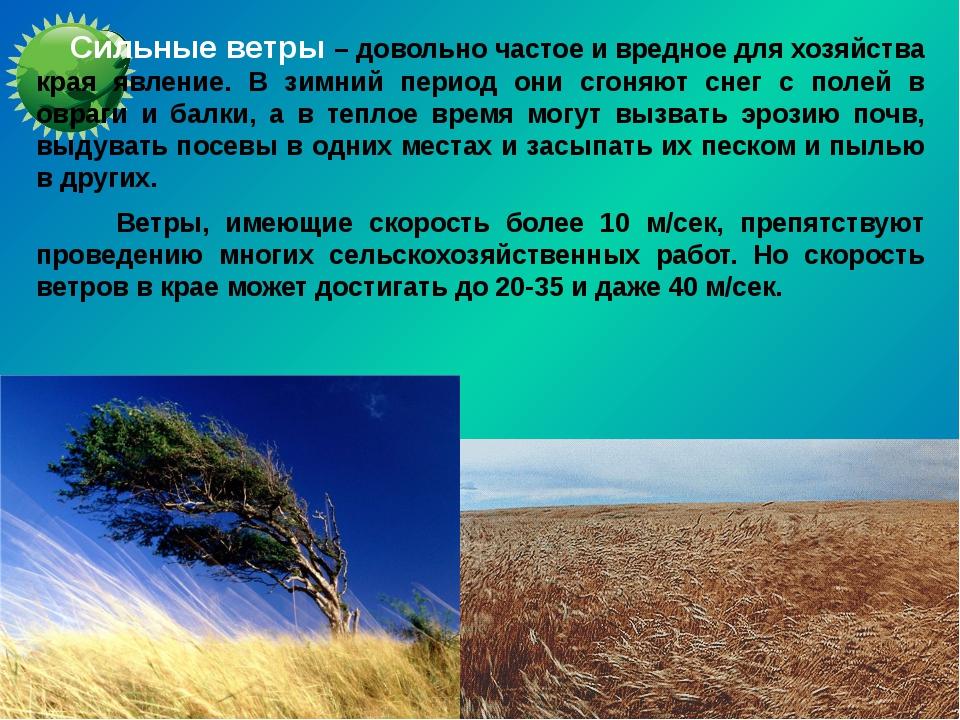 Сильные ветры – довольно частое и вредное для хозяйства края явление. В зимн...