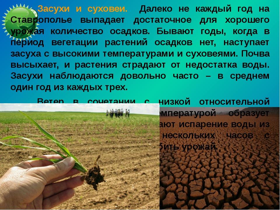Засухи и суховеи. Далеко не каждый год на Ставрополье выпадает достаточное д...