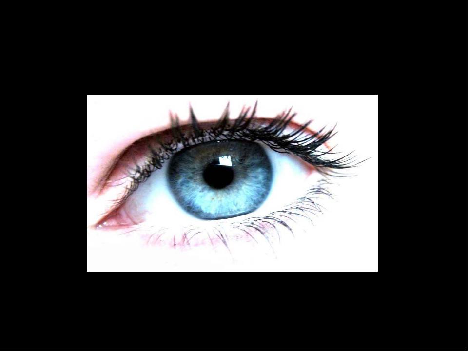 Глаза – орган зрения