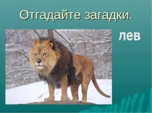 Отгадайте загадки. лев