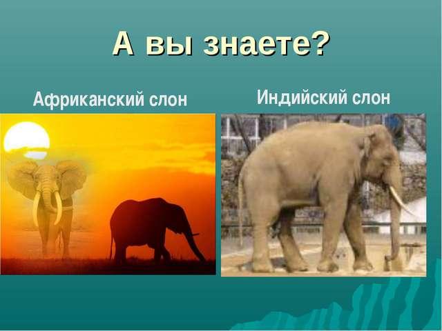 А вы знаете? Африканский слон Индийский слон