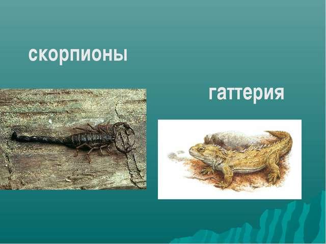 скорпионы гаттерия
