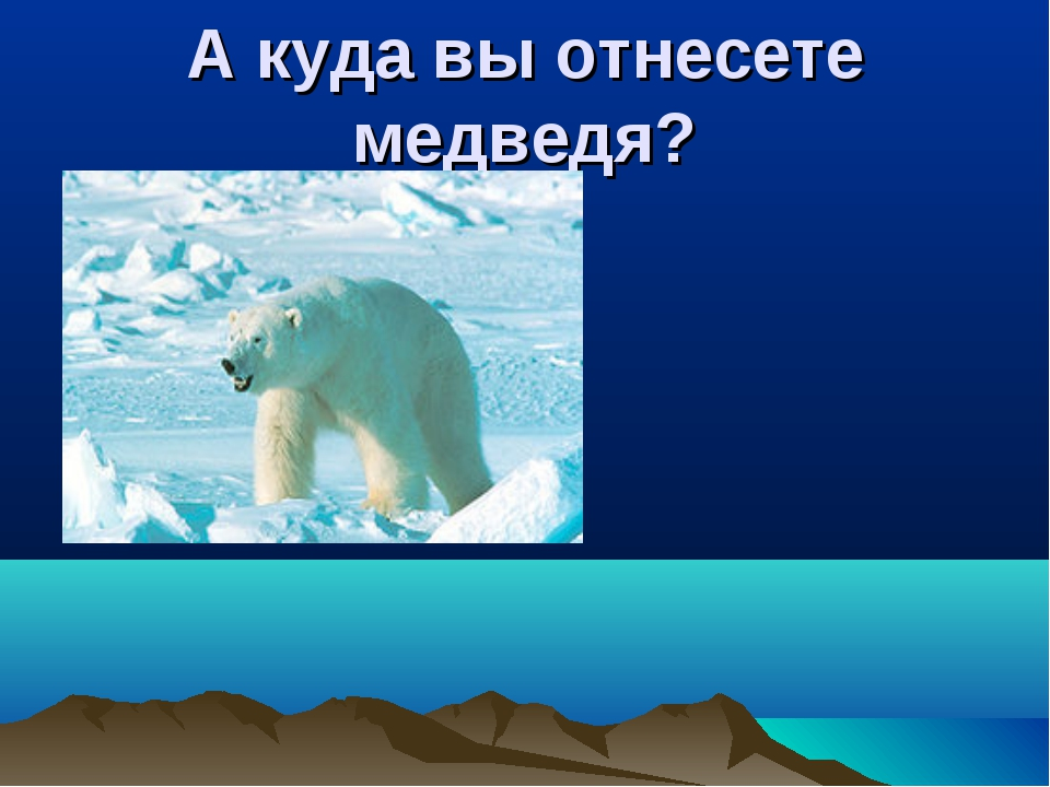 А куда вы отнесете медведя?