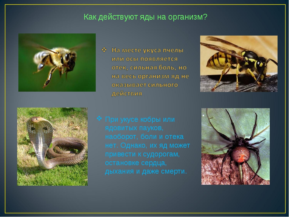 Как действуют яды на организм? При укусе кобры или ядовитых пауков, наоборот,...