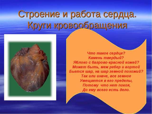 Строение и работа сердца. Круги кровообращения Что такое сердце? Камень тверд...
