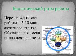 Биологический ритм работы Через каждый час работы – 5-10 мин. активного отдых