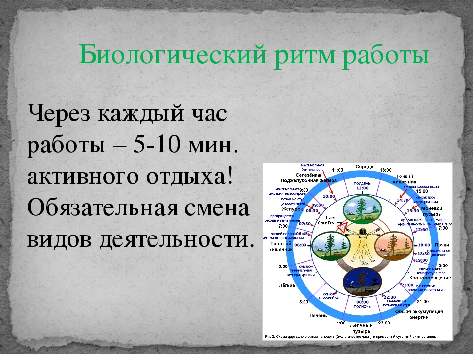 Биологический ритм работы Через каждый час работы – 5-10 мин. активного отдых...