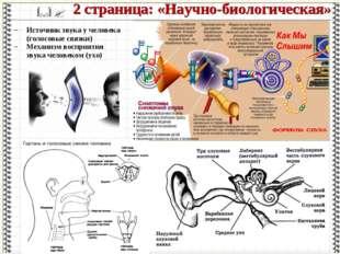 Источник звука у человека (голосовые связки) Механизм восприятия звука челове