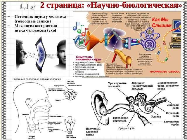Источник звука у человека (голосовые связки) Механизм восприятия звука челове...