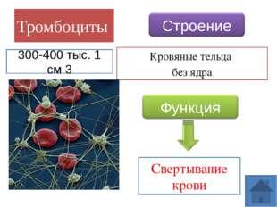 Транспортная функция Защитные функции Гомеостатическая функции Функции крови