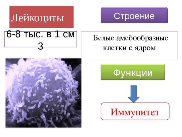 Тромбоциты Кровяные тельца без ядра Свертывание крови 300-400 тыс. 1 см 3 Стр...