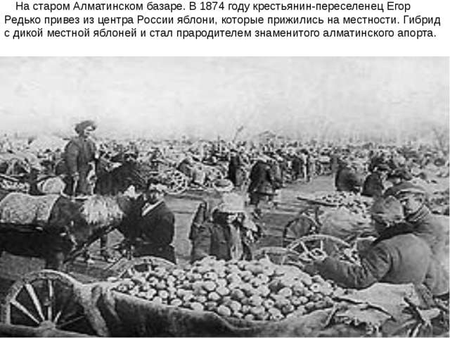 На старом Алматинском базаре. В1874 годукрестьянин-переселенец Егор Редько...