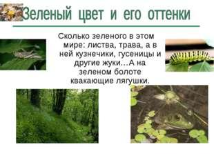 Сколько зеленого в этом мире: листва, трава, а в ней кузнечики, гусеницы и др