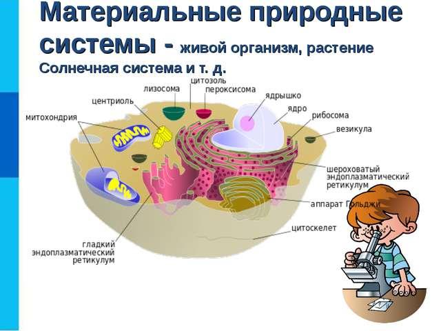 Материальные природные системы - живой организм, растение Солнечная система и...