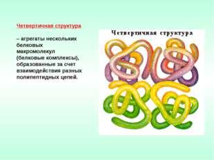Четвертичная структура – агрегаты нескольких белковых макромолекул (белковые