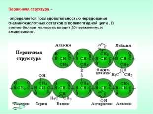 Первичная структура – определяется последовательностью чередования -аминокис
