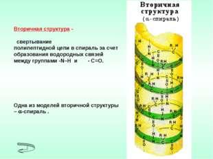 Вторичная структура - свертывание полипептидной цепи в спираль за счет образо