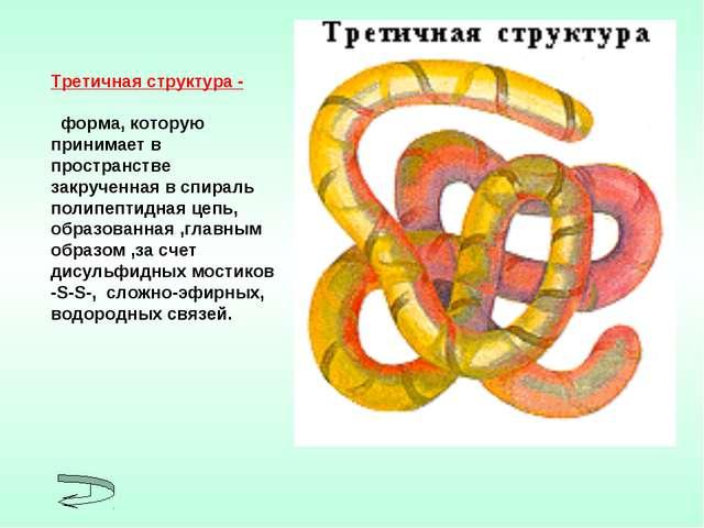 Третичная структура - форма, которую принимает в пространстве закрученная в с...