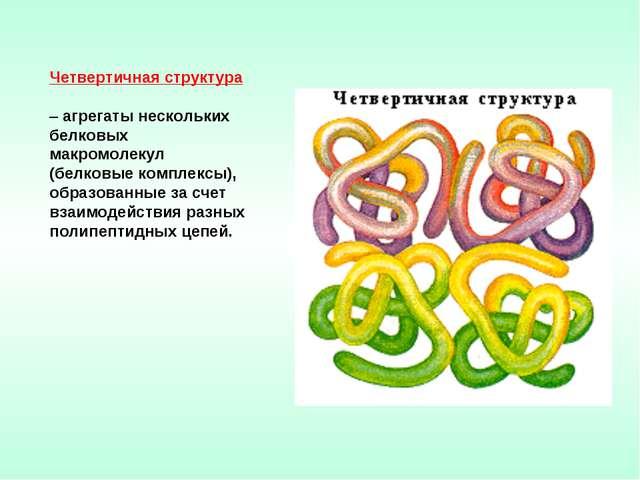 Четвертичная структура – агрегаты нескольких белковых макромолекул (белковые...
