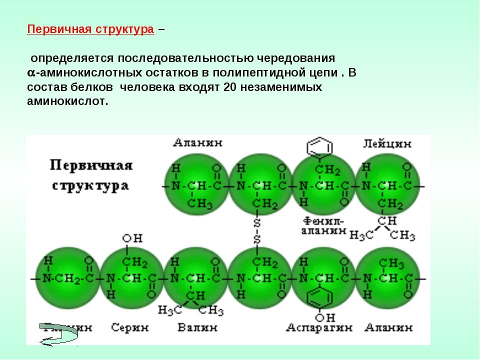 Первичная структура – определяется последовательностью чередования -аминокис...