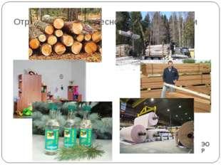 Отраслевой состав лесной промышленности ЭОР