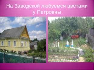 На Заводской любуемся цветами у Петровны