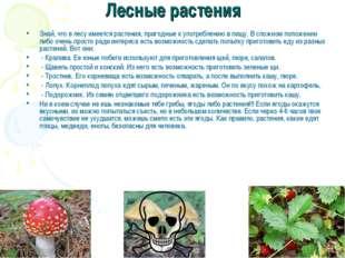 Лесные растения Знай, что в лесу имеется растения, пригодные к употреблению в