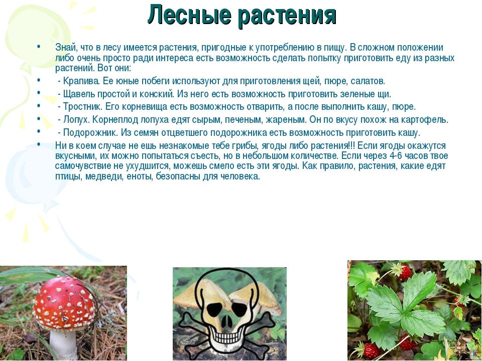 Лесные растения Знай, что в лесу имеется растения, пригодные к употреблению в...