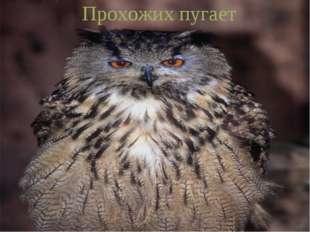 Днём спит, ночью летает, Прохожих пугает