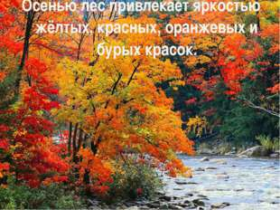 Осенью лес привлекает яркостью жёлтых, красных, оранжевых и бурых красок.