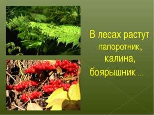 В лесах растут папоротник, калина, боярышник …