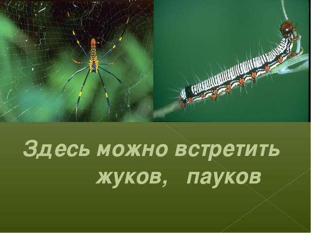 Здесь можно встретить жуков, пауков