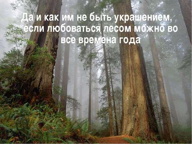 Да и как им не быть украшением, если любоваться лесом можно во все времена года