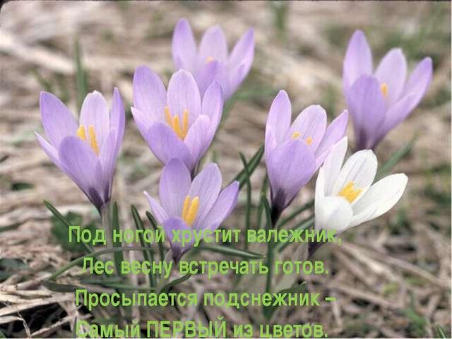 Под ногой хрустит валежник, Лес весну встречать готов. Просыпается подснежни...