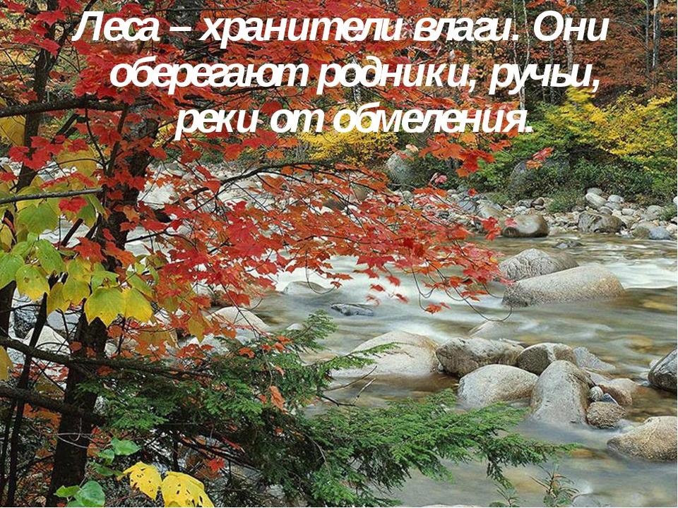 Леса – хранители влаги. Они оберегают родники, ручьи, реки от обмеления.