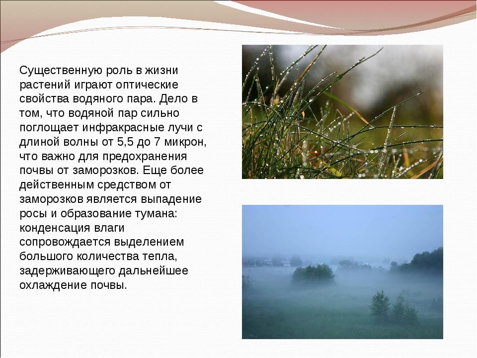 Существенную роль в жизни растений играют оптические свойства водяного пара....
