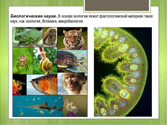Биологические науки. В основе экологии лежит фактологический материал таких н...