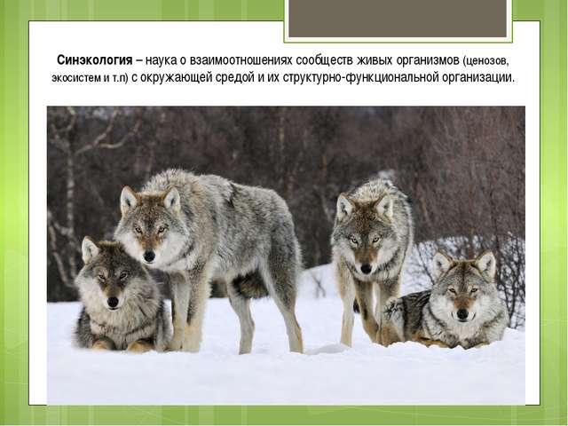 Синэкология – наука о взаимоотношениях сообществ живых организмов (ценозов, э...