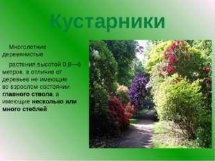 Кустарники Многолетние деревянистые растения высотой 0,8—6 метров, в отлич