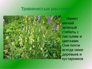 Травянистые растения Имеют мягкий зеленый стебель с листьями и цветками. Они