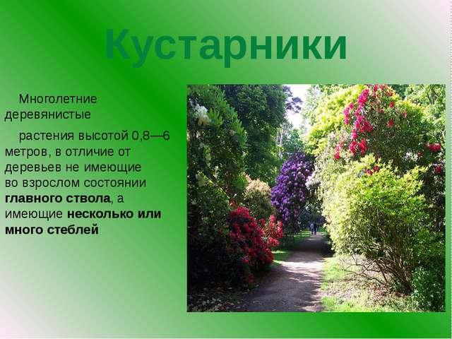 Кустарники Многолетние деревянистые растения высотой 0,8—6 метров, в отлич...