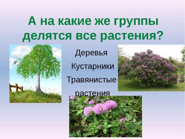А на какие же группы делятся все растения? Деревья Кустарники Травянистые рас...