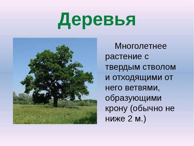 Деревья Многолетнее растениес твердым стволом и отходящими от него ветвями,...