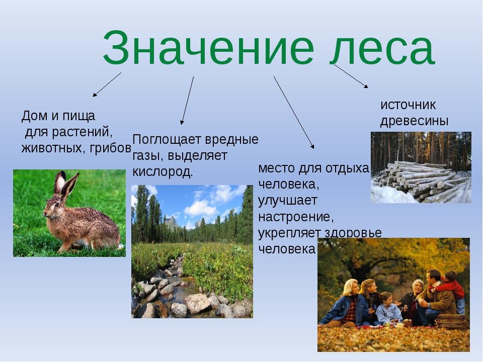 Значение леса Дом и пища для растений, животных, грибов Поглощает вредные га...