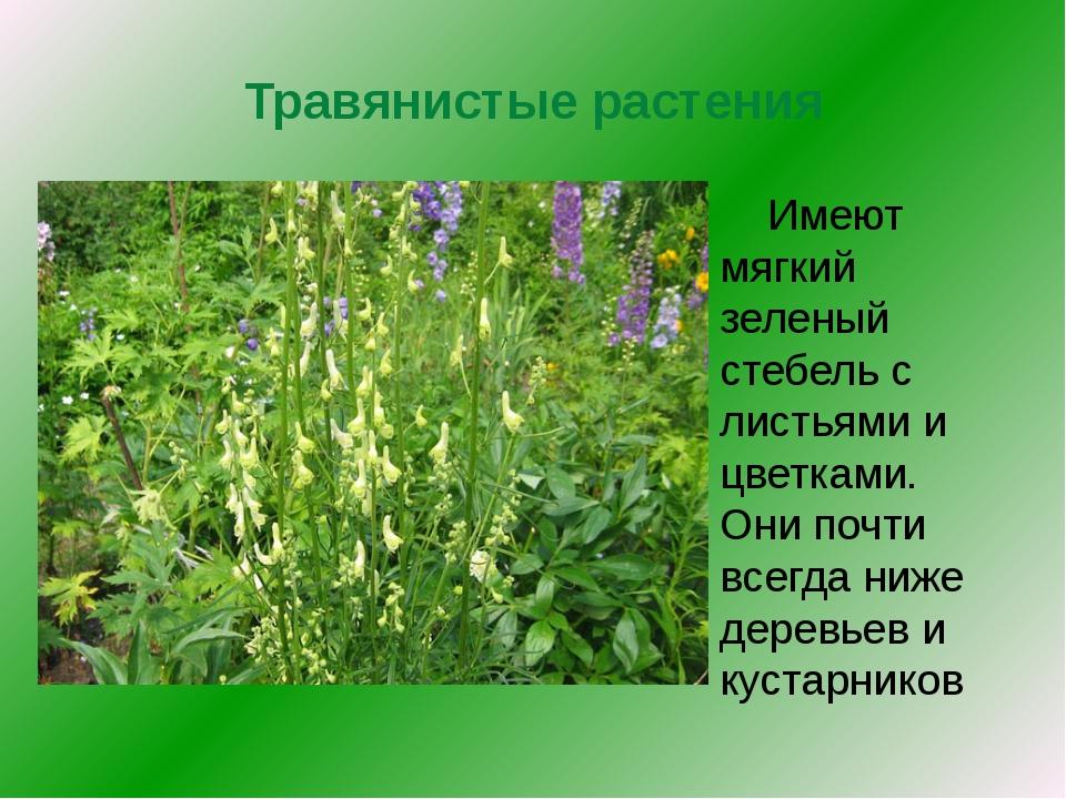 Травянистые растения Имеют мягкий зеленый стебель с листьями и цветками. Они...