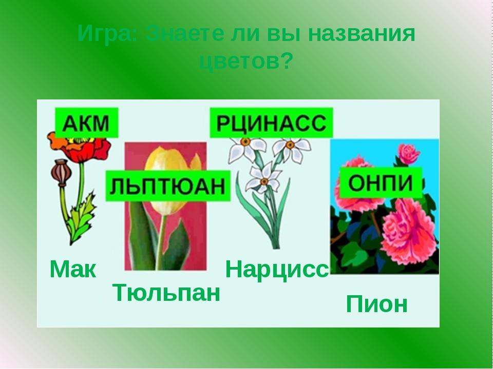 Игра: Знаете ли вы названия цветов? Мак Нарцисс Пион Тюльпан