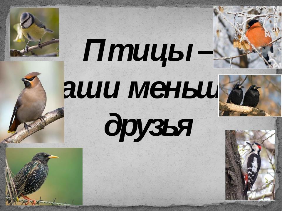 Птицы – наши меньшие друзья