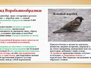 Отряд Воробьинообразные Воробьинообра́зные- устаревшее русское название— вор