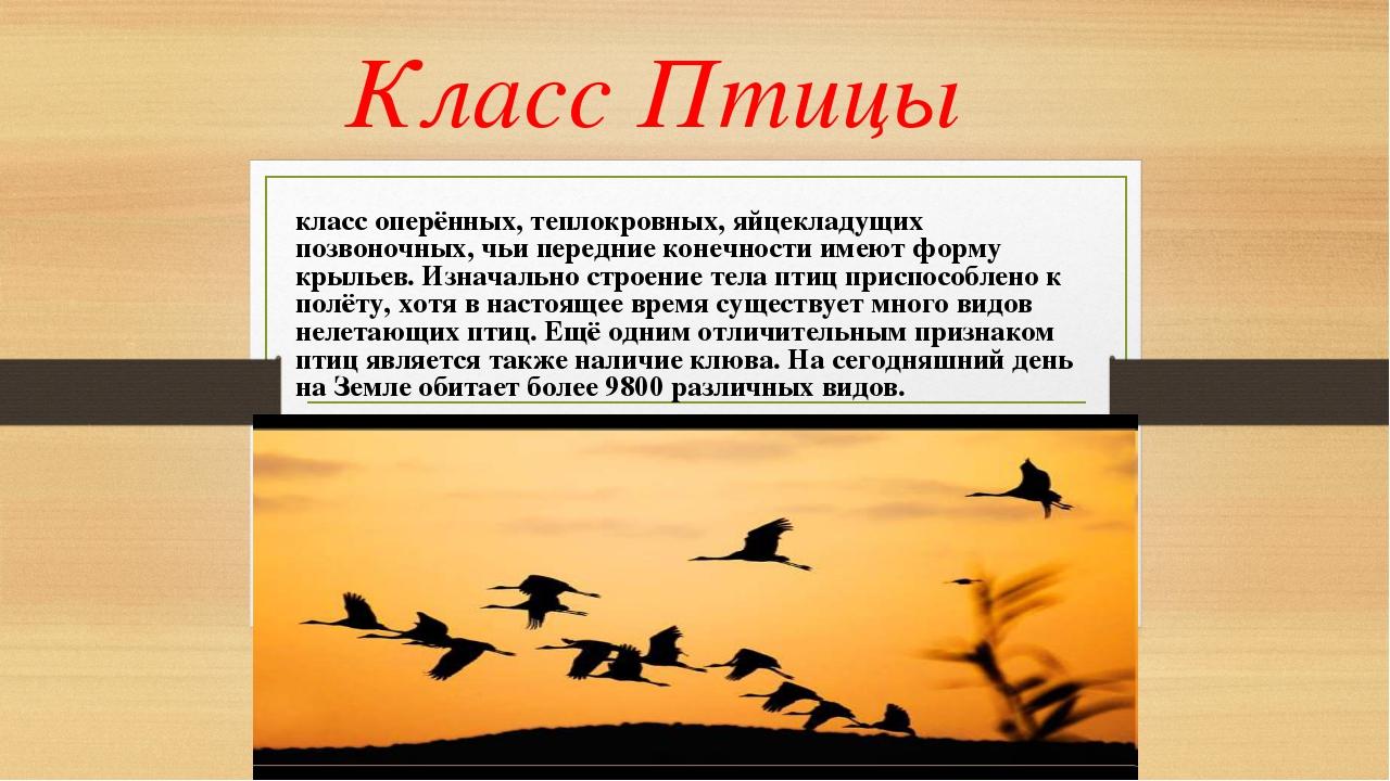 Класс Птицы класс оперённых, теплокровных, яйцекладущих позвоночных, чьи пере...