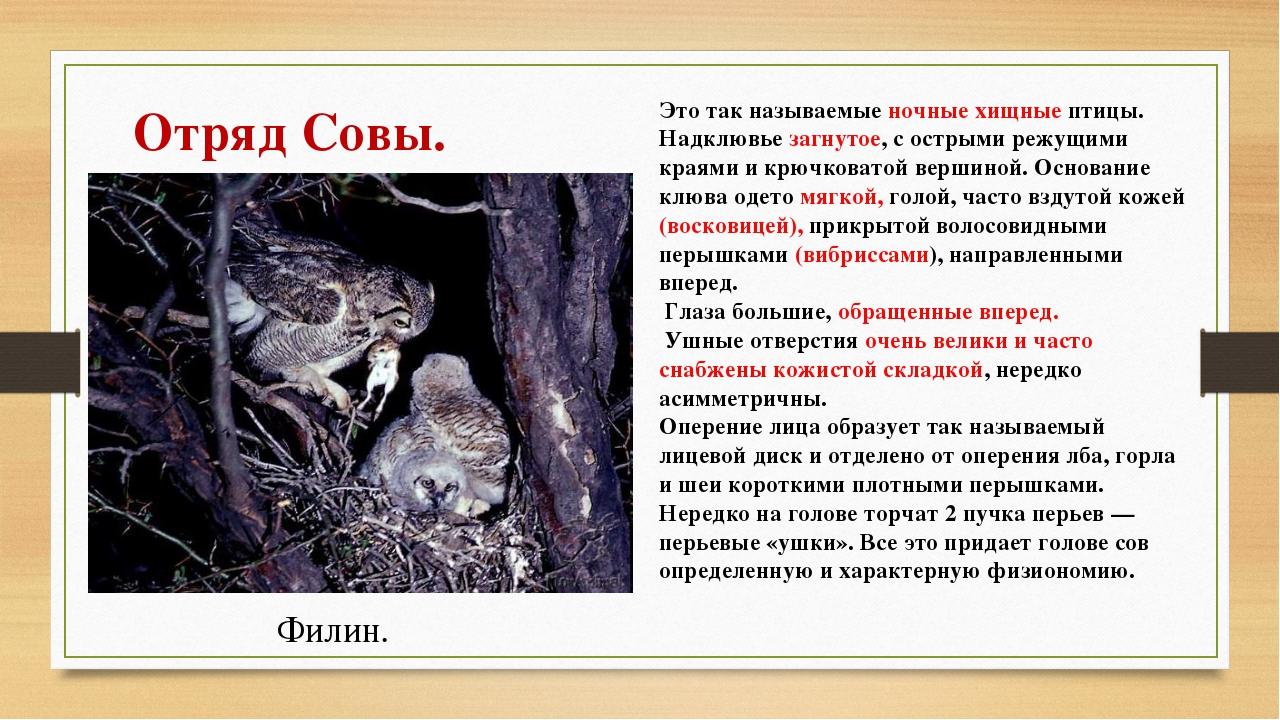 Это так называемые ночные хищные птицы. Надклювье загнутое, с острыми режущим...